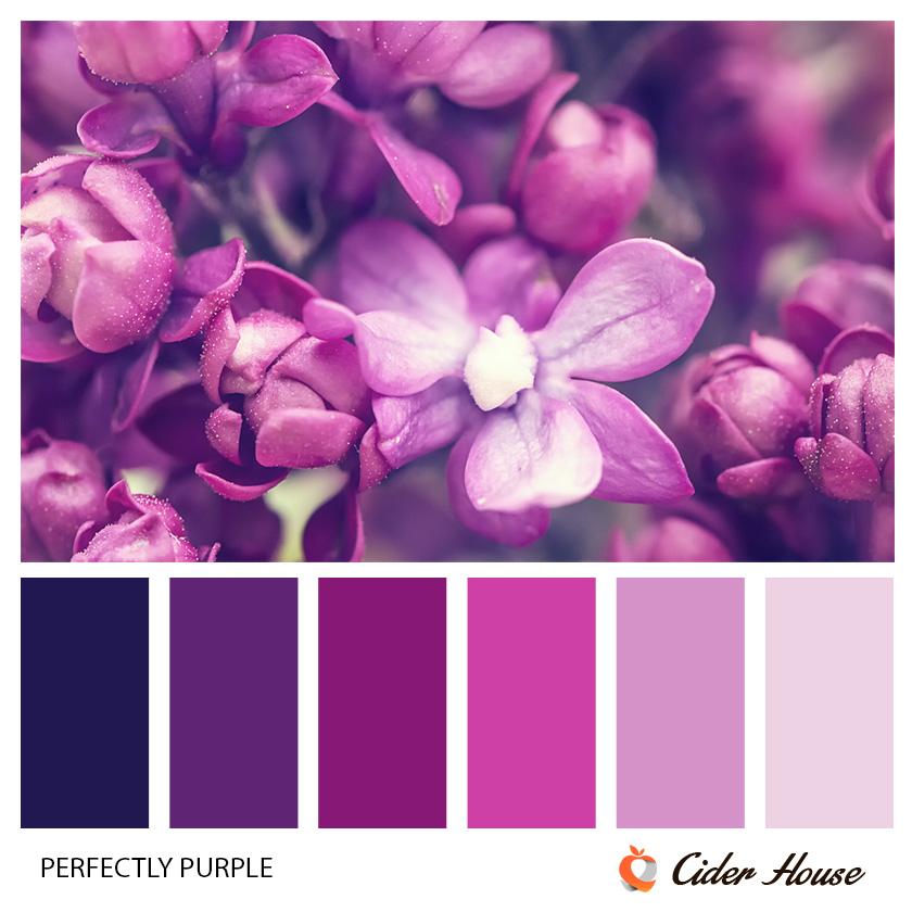 perfectly-purple