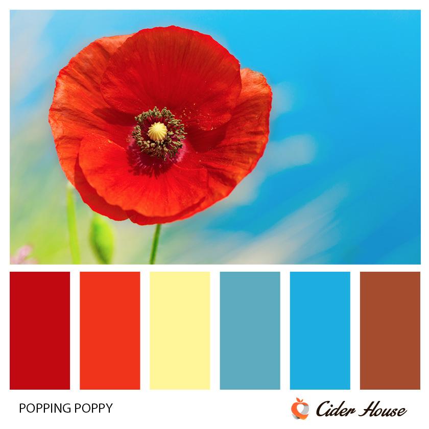 popping-poppy